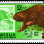 MONGOLIA - CIRCA 1978 Beaver — Stock Photo #6258347