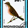 MONGOLIA - CIRCA 1979 Hawk Warbler - Stock Photo