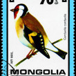 MONGOLIA - CIRCA 1979 Goldfinch - Stock Photo