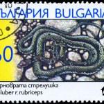 Постер, плакат: BULGARIA CIRCA 1989 Coluber