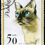 POLAND - CIRCA 1964 Siamese Cat — Stock Photo