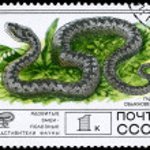 Постер, плакат: USSR CIRCA 1977 Adder