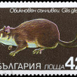 Постер, плакат: BULGARIA CIRCA 1983 Dormouse
