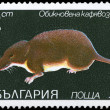 BULGARIA - CIRCA 1983 Shrew — Stock Photo
