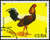 CUBA - CIRCA 1981 Cenizo — Stock Photo