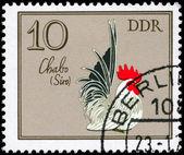 GDR - CIRCA 1979 Chabo — Stock Photo