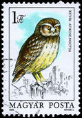 HUNGARY - CIRCA 1984 Little Owl — Stock Photo