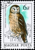 HUNGARY - CIRCA 1984 Ural Owl — Stock Photo