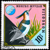 MONGOLIA - CIRCA 1974 Lapwing — Stock Photo