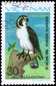 VIETNAM - CIRCA 1982 Pied Falconet — Stock Photo