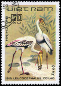 VIETNAM - CIRCA 1983 Painted Stork — Stock Photo