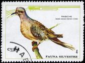 CUBA - CIRCA 1970 Dove — Stock Photo