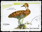 CUBA - CIRCA 1970 Duck — Stock Photo