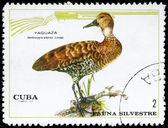 CUBA - CIRCA 1970 Duck — Stock Photo