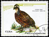 CUBA - CIRCA 1970 Quail — Stock Photo