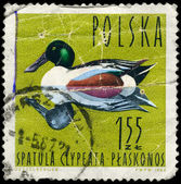 POLAND - CIRCA 1964 Shoveler — Stock Photo