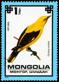 MONGOLIA - CIRCA 1979 Golden Oriole — Stock Photo