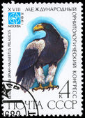 USSR - CIRCA 1982 Eagle — Stock Photo