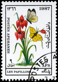 AFGHANISTAN - CIRCA 1987 Butterflies — Stock Photo