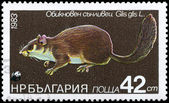 BULGARIA - CIRCA 1983 Dormouse — Stock Photo