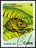 CUBA - CIRCA 1984 Frog — Stock Photo