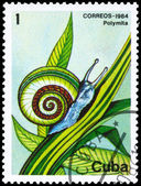 CUBA - CIRCA 1984 Snail — Stock Photo