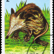 CUBA - CIRCA 1984 Solenodon - Stock Photo
