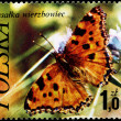 POLAND - CIRCA 1977 Large Tortoiseshell — Stock Photo