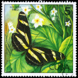 CUBA - CIRCA 1982 Heliconius — Stock Photo
