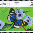 Stock Photo: CUB- CIRC1984 Heliconius