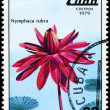 Stock Photo: CUB- CIRC1979 Red Nymphaea