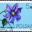 POLAND - CIRCA 1984 Clematis lanuginosa — Stock Photo