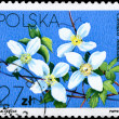 POLAND - CIRCA 1984 Clematis montana — Stock Photo