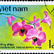 VIETNAM - CIRCA 1979 Dendrobium Bloom — Stock Photo
