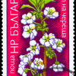 BULGARIA - CIRCA 1975 Cherry — Stock Photo #6262738