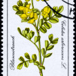 GDR - CIRC1981 Bladder Senna — Stock Photo #6262808