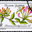 GDR - CIRCA 1981 Honeysuckle — Stock Photo