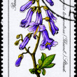 GDR - CIRCA 1981 Paulownia — Stock Photo