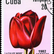 CUBA - CIRCA 1982 La Tulipe Noire — Stock Photo
