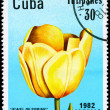 CUBA - CIRCA 1982 Jewel of Spring — Stock Photo