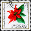 POLAND - CIRCA 1966 Poinsettia — Stock Photo