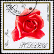 POLAND - CIRCA 1966 Rose — Stock Photo