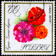 POLAND - CIRCA 1966 Zinnias — Stock Photo