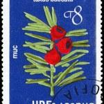 Постер, плакат: BULGARIA CIRCA 1976 Yew