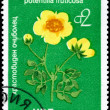 BULGARIA - CIRCA 1976 Potentilla — Stock Photo