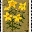 BULGARIA - CIRCA 1981 St. John's wort — Stock Photo