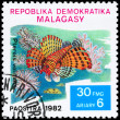 MALAGASY - CIRCA 1982 Red Lionfish — Stock Photo