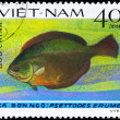 VIETNAM - CIRCA 1982 Flatfish — Stock Photo