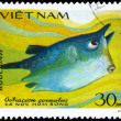 Royalty-Free Stock Photo: VIETNAM - CIRCA 1984 Boxfish