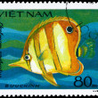 Royalty-Free Stock Photo: VIETNAM - CIRCA 1984 Butterflyfish